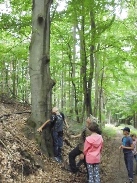 Naturcamp3-2015-019